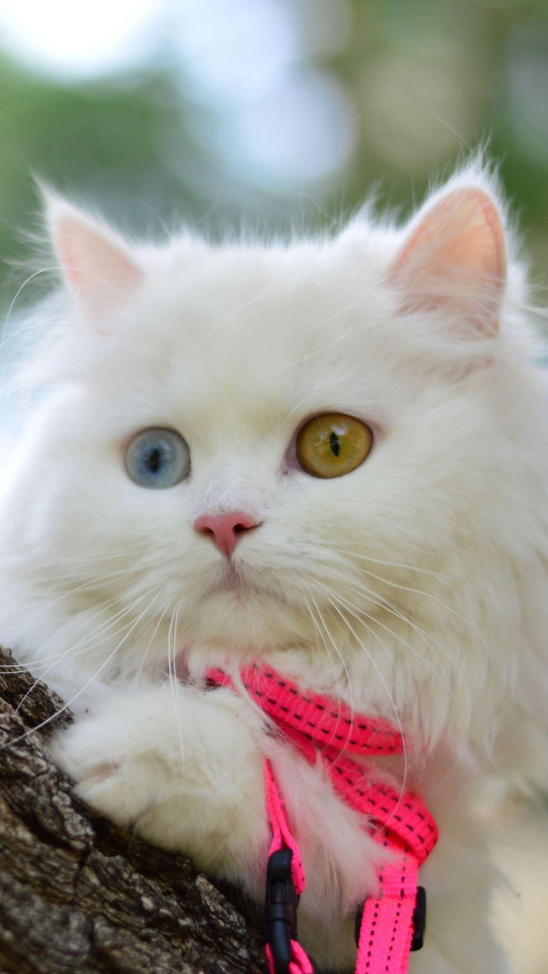 WallpaperFusion-pretty-kitty-Original-1080x1920.jpg